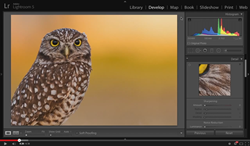 Editing for Print – Sharpening with Tim Grey